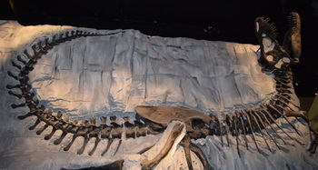 """Black Beauty"", Royal Tyrrell Museum, Drumheller, AB"