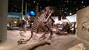 Lambeosaurus Royal Tyrrell Museum
