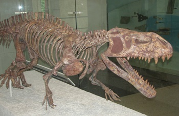 Menacing Prestosuchus. American Museum of Natural History, New York, NY.