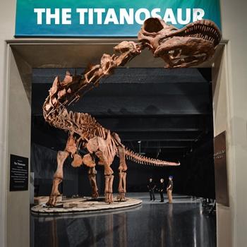 New Titanosaur exhibit, American Museum of Natural History, New York, NY. Photo copyright: AMNH, D. Finnan.