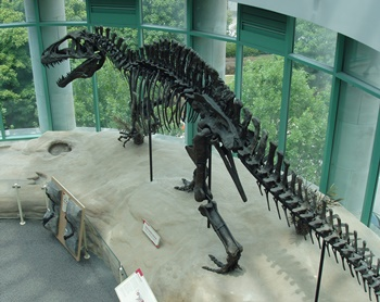 The wonderful Acrocanthosaurus display at the North Carolina Museum of Natural Sciences. Raleigh, NC.