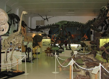 Dinosaurs everywhere! Black Hills Institute Museum, Hill City, SD.