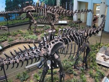 Diplodocus and Apatosaurus display. Carnegie Museum of Natural History, Pittsburgh, PA.