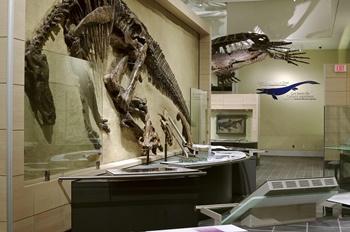 Edmontosaurus display, Canadian Museum of Nature. Ottawa, ON.