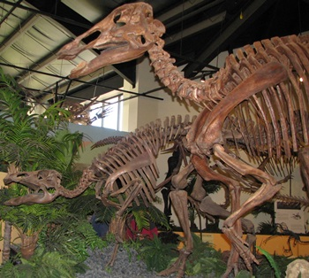 Edmontosaurus display. Rocky Mountain Dinosaur Resource Center, Woodland Hills, CO.