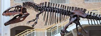 Giganotosaurus display, Fernbank Museum of Natural History. Atlanta, GA.