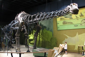 Allosaurus roar s top twenty five north american dinosaur Dinosaur museum ohio
