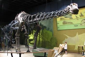 Allosaurus vs. Haplocanthosaurus. Cleveland Museum of Natural History, Cleveland, OH.