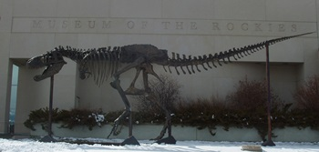 """Big Mike"" the Tyrannosaurus rex. Museum of the Rockies, Bozeman, MT."