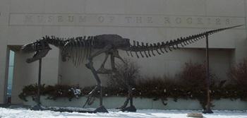 """Big Mike"" the Tyrannosaurus rex. Museum of the Rockies, Bozeman, MT."