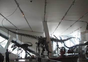 Dinosaur hall, Royal Ontario Museum, Toronto, ON.