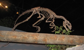 Tanycolagreus. Museum of Ancient Life at Thanksgiving Point. Lehi, UT.