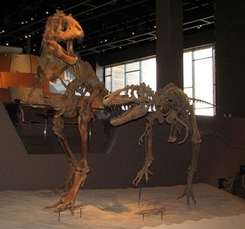 Teratophoneus display. Utah Museum of Natural History, Salt Lake City, UT.