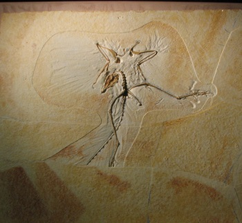 Archaeopteryx display, Wyoming Dinosaur Center, Thermopolis, WY