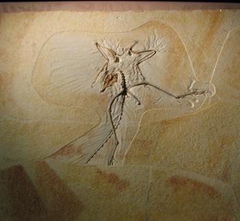 Archaeopteryx display, Wyoming Dinosaur Center, Thermopolis, WY