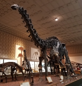 The great dinosaur hall at the Yale Peabody Museum, New Haven, CT.