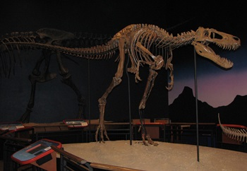 """Jane"" the juvenile T rex on display at the Burpee Museum of Natural History, Rockford, IL."