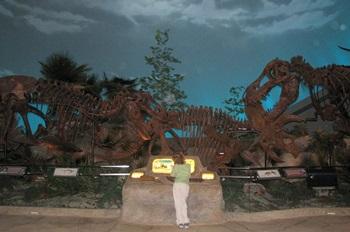 Dinosphere display, Children's Museum of Indianapolis, Indianapolis, IN.