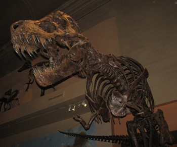 T rex exhibit, Smithsonian National Museum of Natural History, Washington, DC.