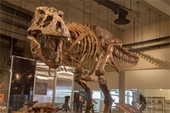 """Scotty"" the T. rex at the T. rex Discovery Centre, Eastend, Saskatchewan."