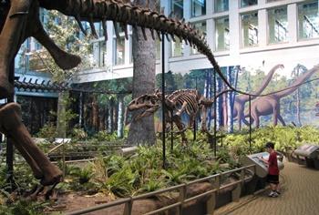 Allosaurus stalking Apatosaurus. Carnegie Museum of Natural History, Pittsburgh, PA.