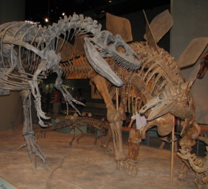 Allosaurus vs. Stegosaurus. Denver Museum of Nature and Science, Denver, CO.