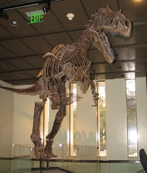 "Cast of ""Big Al Two."" Allosaurus display, Houston Museum of Natural Science. Houston, TX."
