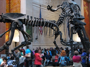 Allosaurus vs. Barosaurus. American Museum of Natural History, New York, NY.