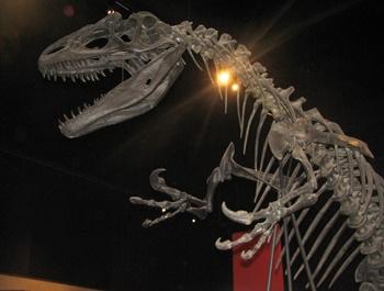 Allosaurus display. University of Michigan Museum of Natural History, Ann Arbor, MI.