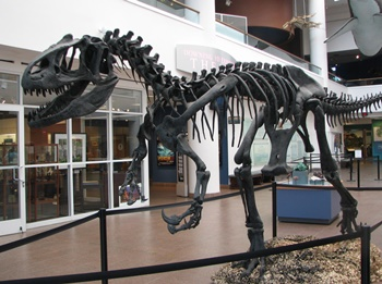 Allosaurus display. San Diego Natural History Museum, San Diego, CA.