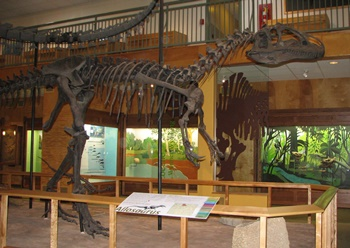 """Big Al"" the Allosaurus. University of Wyoming Geological Museum, Laramie, WY."