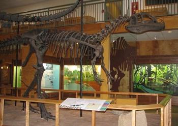 """Big Al"" the Allosaurus. University of Wyoming Geological Museum, Laramie, WY."
