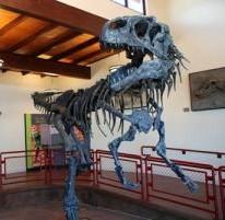Allosaurus display. Cleveland-Lloyd Dinosaur Quarry, near Cleveland, UT.