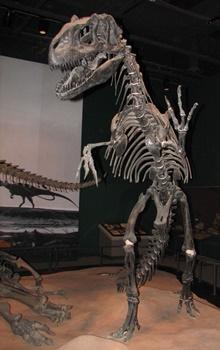 Allosaurus Minnesota