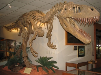 Terrifying Torovosaurus display. Brigham Young University Museum of Paleontology, Provo, UT.