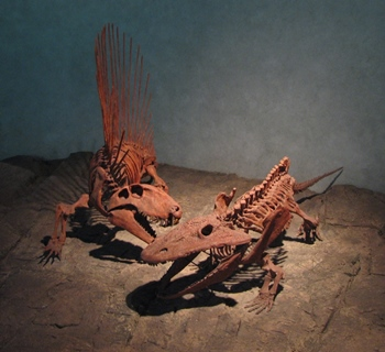 Permian battle Dimetrodon vs. Eryops. Denver Museum of Science and Nature, Denver, CO.