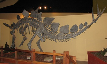 Stegosaurus display. Dinosaur Journey Museum of Western Colorado, Fruita, CO.