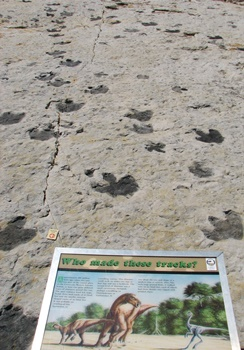 Multiple dinosaur tracks at Dinosaur Ridge, Morrison, CO.