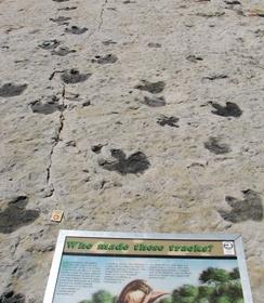 Multiple dinosaur tracks at Dinosaur Ridge, Morrison, CO.