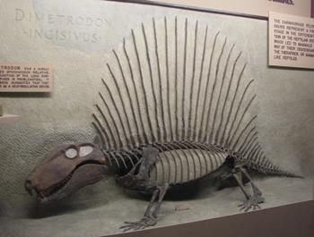 Fantastic Dimetrodon display. University of Michigan Museum of Natural History, Ann Arbor, MI.