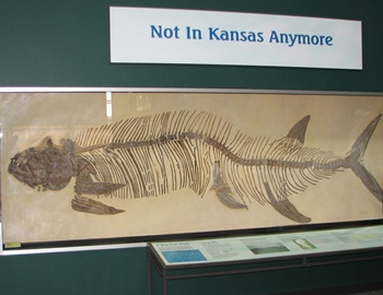 Nice Xiphactinus display, Science Museum of Minnesota, St. Paul, MN.
