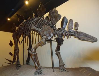 Stegosaurus exhibit, University of Nebraska State Museum, Lincoln, NE.