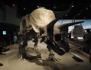 Triceratops display. Royal Tyrrell Museum, Drumheller, AB.