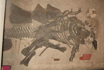 Interesting Stegosaurus display. Smithsonian National Museum of Natural History, Washington, DC.