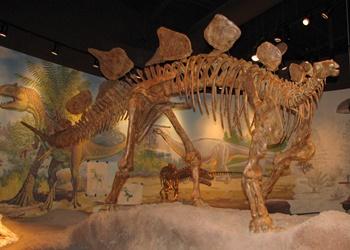 Stegosaurus display. Utah Field House of Natural History, Vernal, UT.