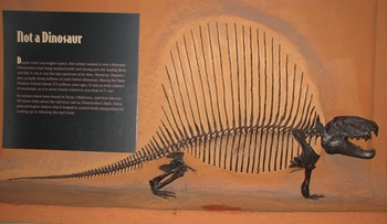 Dimetrodon display, Natural History Museum of Utah, Salt Lake City, UT.