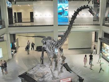 Terrific display of Brachiosaurus. Houston Museum of Natural Science, Houston, TX.
