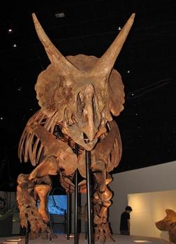 Texas Houston Museum Dinosaur
