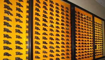 Wall of 400+ Dire Wolf skulls. La Brea Tar Pits & Museum, Los Angeles, CA.