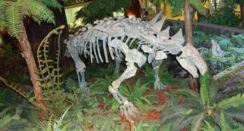 Nodosaur display, McWane Science Center, Birmingham, AL.